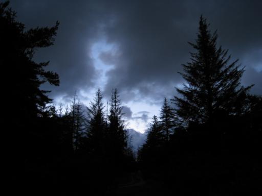 Skoven ved Hjortdal Kirke