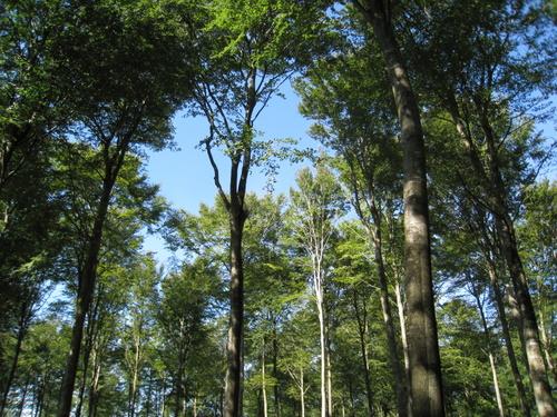 Flot skov