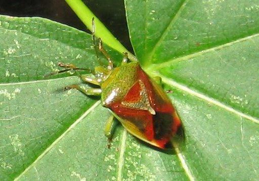 Flot insekt