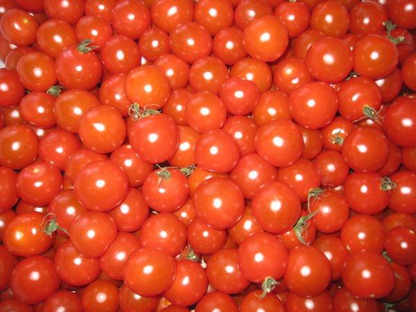 Tomater - mange tomater.