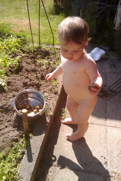Kartoffelopgravning.