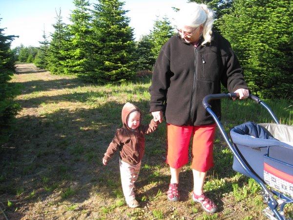 På skovtur med mormor. Vi var oppe at se på nobiliskogler.