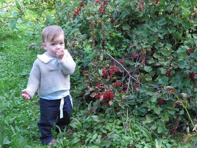 Ellen fandt en ribsbusk i farmor og farfars have.
