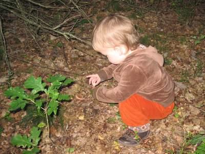 Ellen kigger på svampe og samler agern.