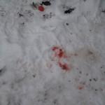 Blodspor.