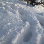 """Fodspor i sneen…"""